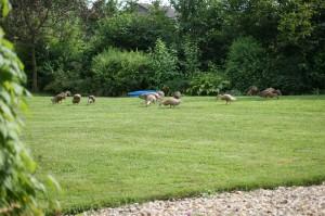 Na posekané trávě je to nejlepší