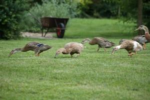 Nejraději lovíme na čerstvě posečené trávě